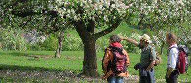 Obstwiesenwanderung Lindscheid
