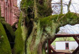 Körpersprache der Bäume Wanderung