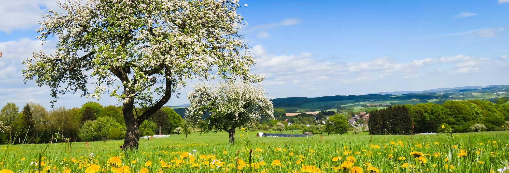 Obstwiesenwanderung Oberbergisches Land