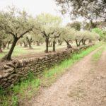 Wandern durch die Weinberge Sommières