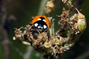 Wanderung Makrofotografie Insekten