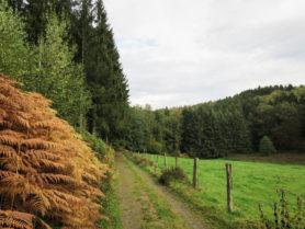 Wald Land Fluss Wandern im Homburger Ländchen