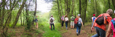 Wandern örpersprache der Bäume