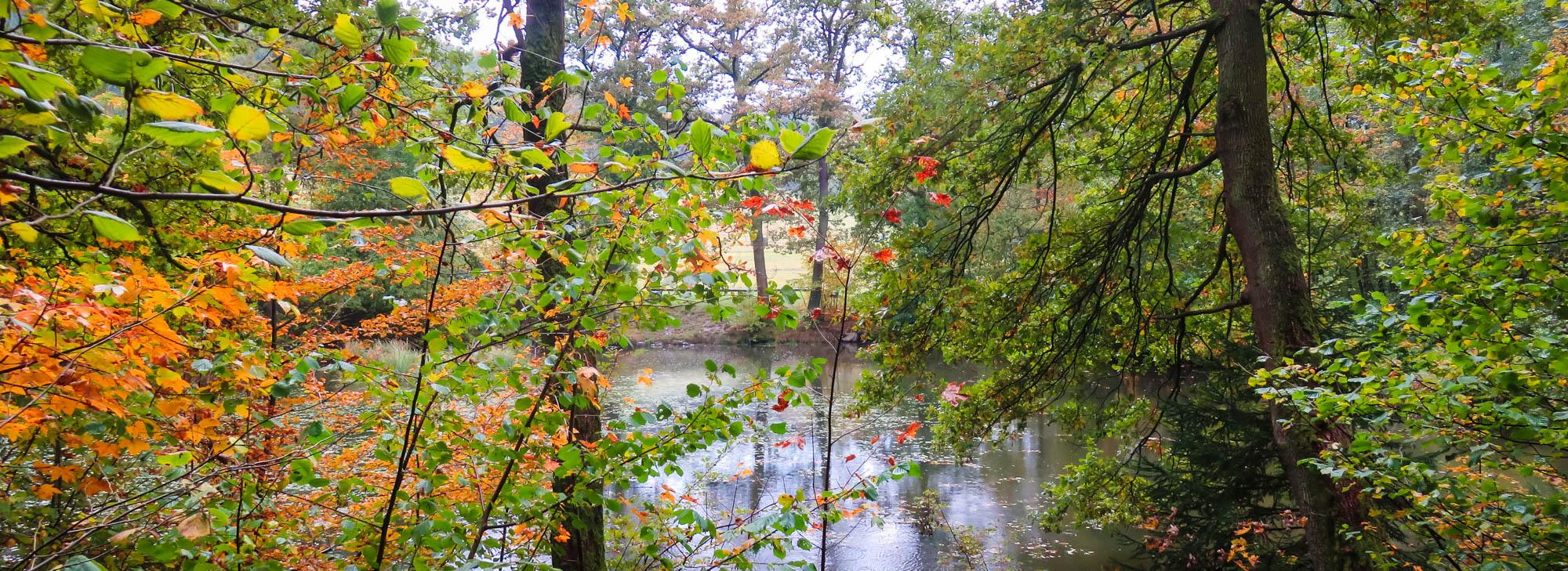Wald im Herbst Wanderung