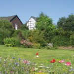 Bluemnwiese und Fachwerkhaus