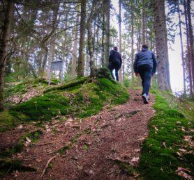 2 Personen wandern einen steilen Pfad im Wald hoch, oben hohe Fichten oder Tannen