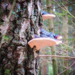Schwammbewuchs an einer Baumrinde