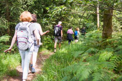 Menschen wandern durch den Wald