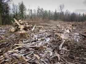 Jede Menge kaputtes Holz