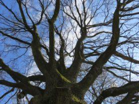 Blick in eine Baumkrone ohne Blätter