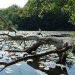 Ein idyllischer See mit Altholz